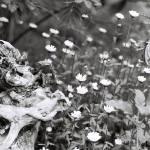 """Gnarled"" by TerraformDesign"