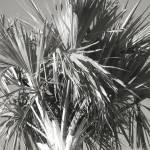 """palmtree"" by gabyphoto79"