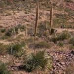 """""""El Paso Desert I"""" by MarksClickArt"""