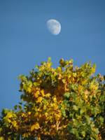 Cottonwood Moon I