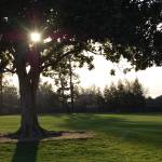 """Tree at dusk"" by ArielofOrange"
