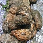 """Gnarly Tree"" by MarksClickArt"