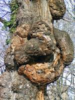 Gnarly Tree