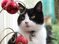 Bubble the cat and the Christmas baubles