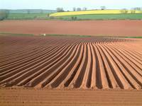 Red Soil Furrows