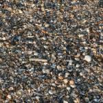 """""""shells"""" by heysje"""