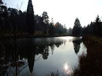 Sunset at Pinetum