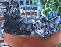 Two cats in pot