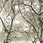 """Snowy Walk"" by oksanafox77"