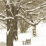 """""""The Bench"""" by oksanafox77"""
