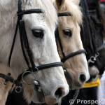 """4 Horses Marching during St David Day"