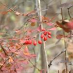 """Last Berries"" by MarksClickArt"