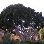 """""""Balboa Park I"""" by MarksClickArt"""