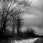 """Imagekind"" by Dracazoe"