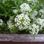 """Tiny Flowers"" by teaandorigami"