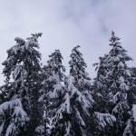 """Christmas Trees"" by teaandorigami"