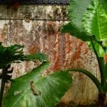 """""""forest wall"""" by GMoscarda"""
