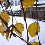"""""""Winter Leaves"""" by teaandorigami"""
