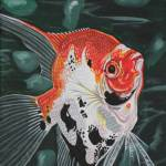 """Koi Angelfish"" by juliesillustration"