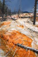 Mammoth Hot Springs (22)