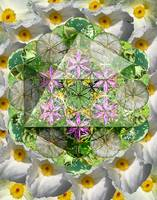 Icosahedron: Nettle, Thistle, Ragweed, Grass