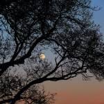 """""""Moon"""" by molly_mualla"""