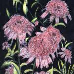 """Echinacea Pinks"" by arlene72"