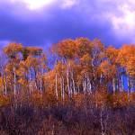 """autumn trees"" by deddie2u"