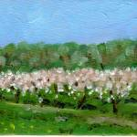 """Cherry Trees Under the Escarpment"" by splynch"