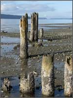 Beach Pilings on Puget Sound