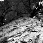 """B&W Tree Bark & Canopy"" by thejiggerypokery"