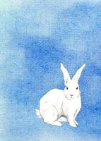 Rabbit Blue