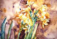 Paperwhites Gold