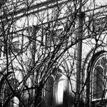 """Arches and Branches, Charleston, SC"" by PadgettGallery"