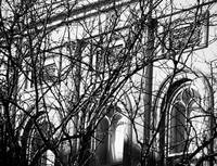 Arches and Branches, Charleston, SC