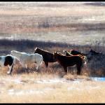 """""""horses"""" by melissaanderson"""