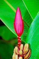 Tropical Hawaiian Flower2