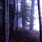 """Thunder Lake Purple Pines"" by RichardBaumer"
