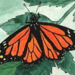 """Monarch Butterfly"" by jcartworks"