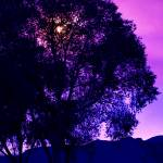 """Purple Tree"" by JulieCJohnson"