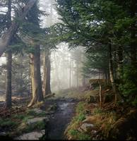 Appalacian Trail in the Great Smokey Mountains Nat