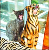 Copy Cat Yawning
