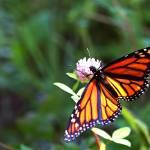 """""""Flutterfly"""" by matthewclarkphotography"""
