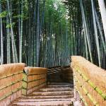 """Stairs in a Bamboo Forest"" by fberluteau"