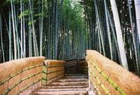 Stairs in a Bamboo Forest