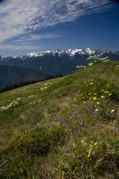 Huricane ridge - Olympic peninsula