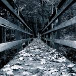 """forest bridge"" by toph"