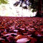 """forest floor"" by toph"