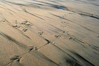 Footprints in the Streaky Sand