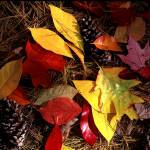 """Tinker Creek Nature Preserve Leaves"" by RichardBaumer"